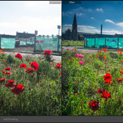 Lightroom-Before-and-After-Poppies
