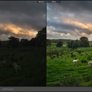 Lightroom-Before-and-After-Sheep