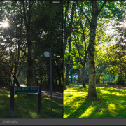 Lightroom-Before-and-After-Trees